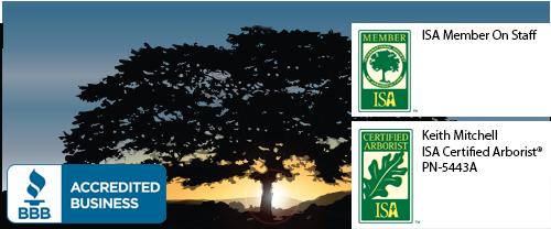 tree service tree removal