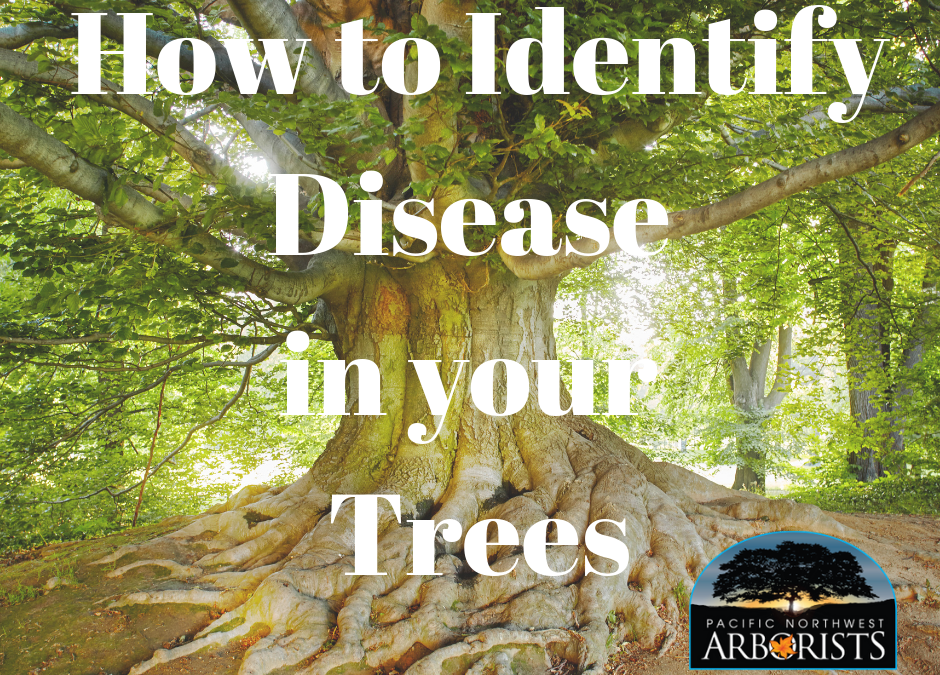 How to Identify Tree Diseases