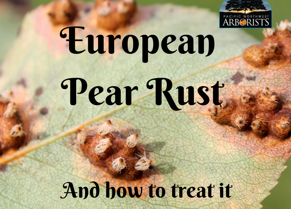 European Pear Rust: A Juniper Fungus