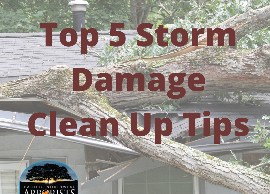 Top 5 Storm Damage Tree Clean Up Tips