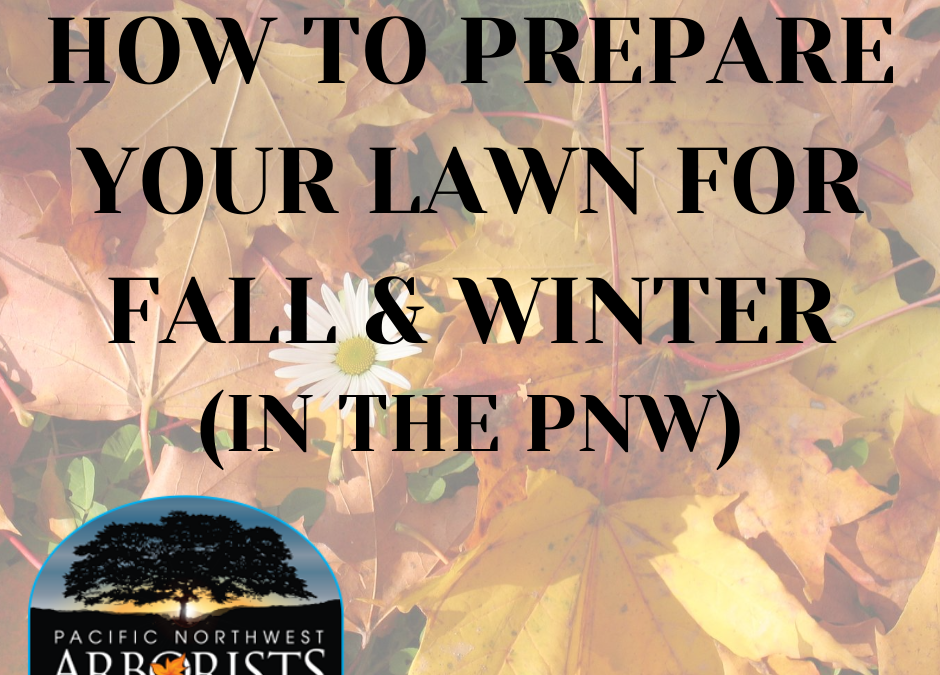 How To Prepare Your Lawn For Fall and Winter (In The PNW)
